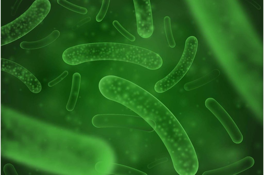 腸胃益生菌推薦