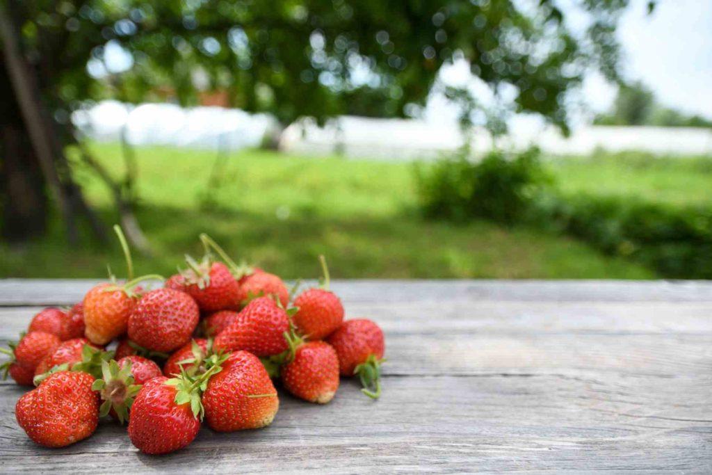 日本專利草莓萃取物