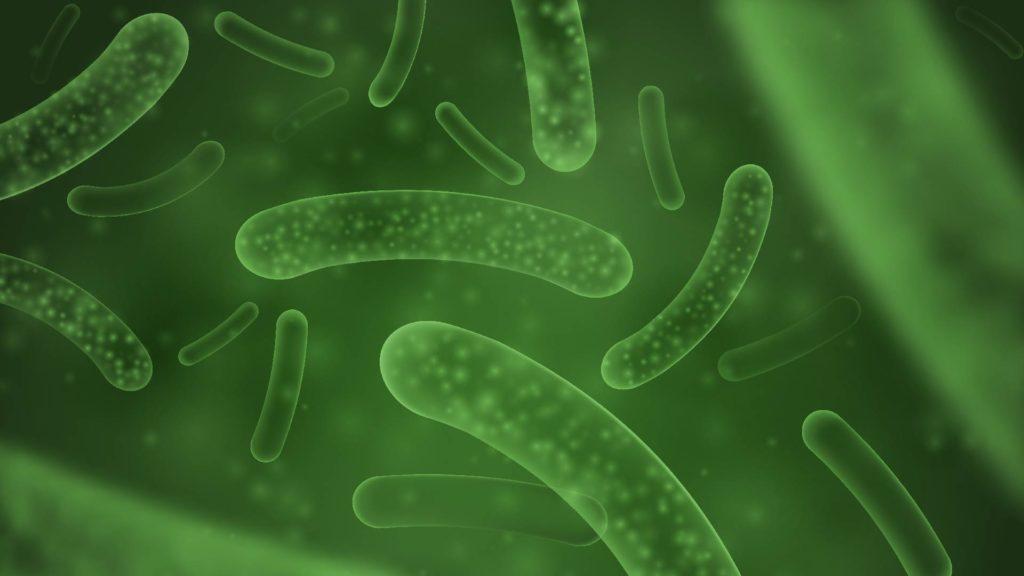 益生菌是什麼