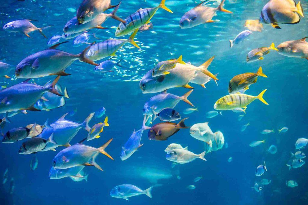 魚油挑選深海魚