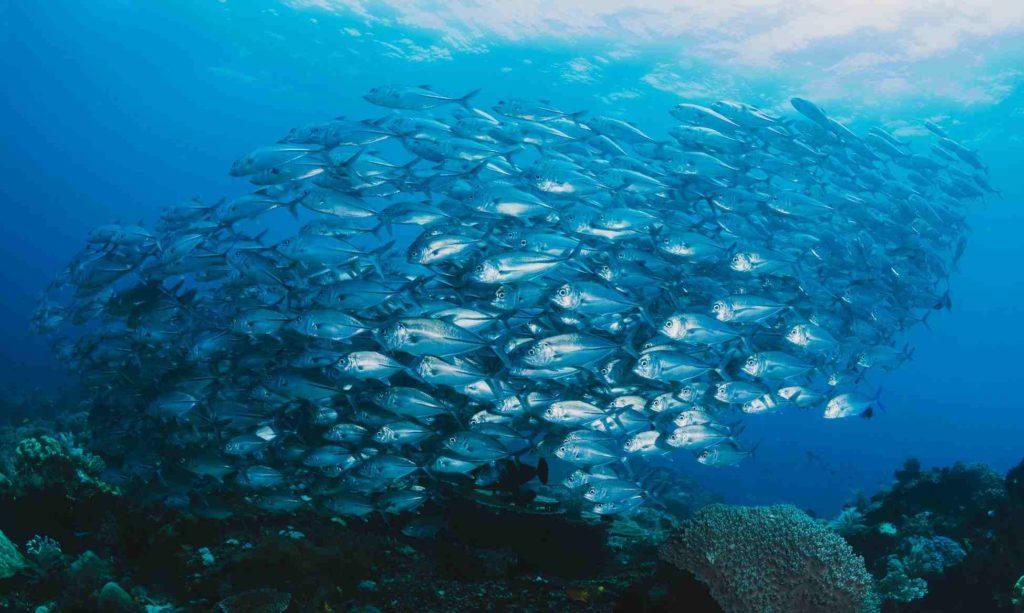 深海魚油推薦