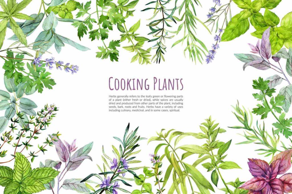 天然植物精萃