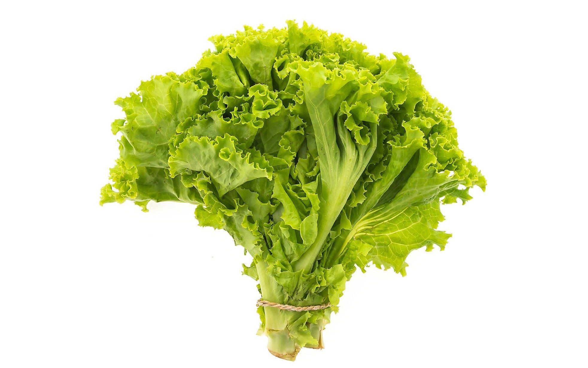 膳食纖維萵苣