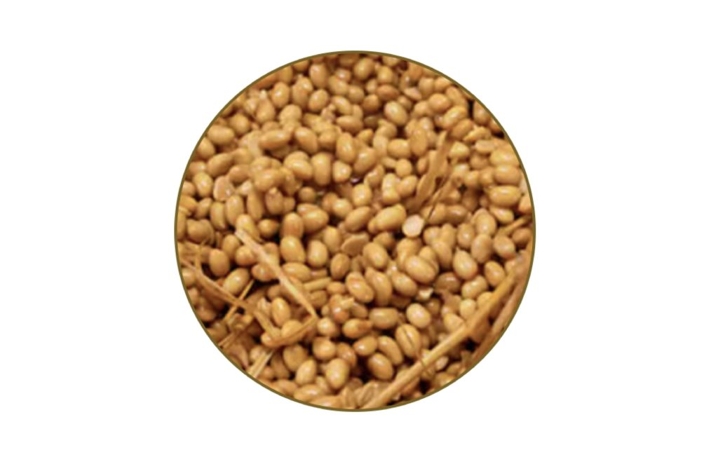 納豆紅麴推薦